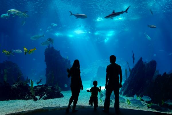 Maui Family-Friendly Attractions